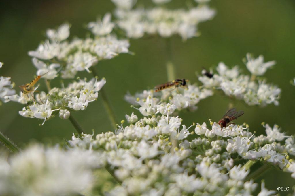 Insectes sur les fleurs