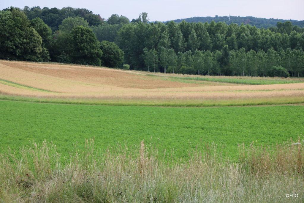 Paysage avec vu sur les champs