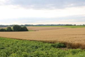 Paysage avec vue sur les champs agricoles
