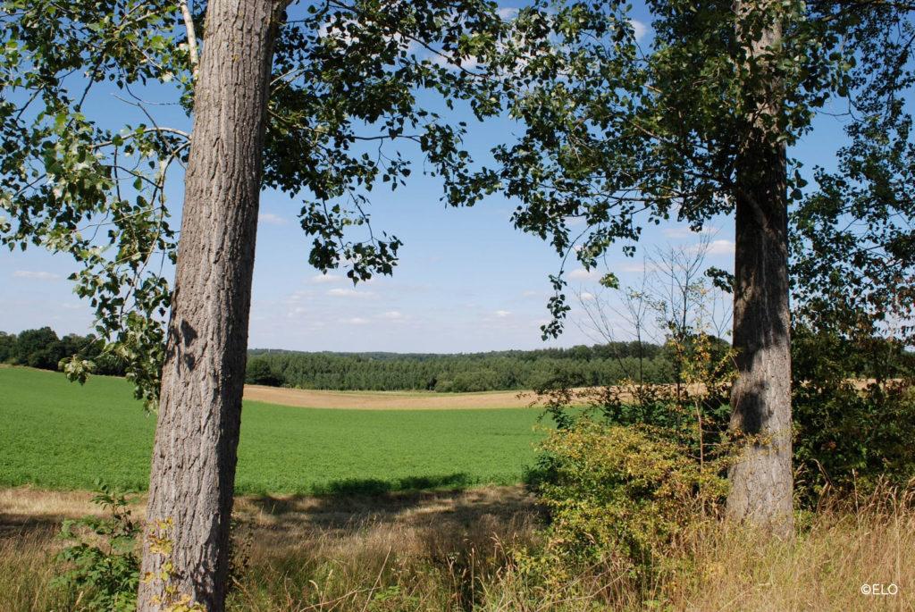 Paysage avec vue sur les plaines